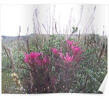 indian paint brush #1 Poster