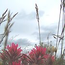 indian paint brush #3 by conilouz
