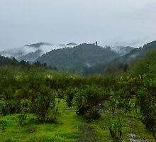 Mad River Fish Hatchery, Humboldt County, California, USA by Mike Kunes