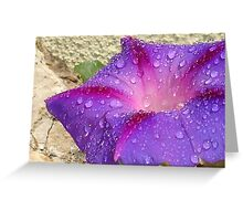 Purple Ipomoea With Raindrops and Stone Background Greeting Card