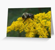 Buzzzzzzzzzzzz Greeting Card