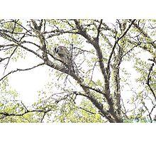 Night Heron Nesting Photographic Print