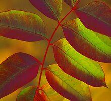 Autumn Glow by Robert George