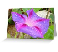 Mauve and Magenta Morning Glory with Water Drops Greeting Card