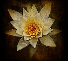 Water Lilly by David Atkinson
