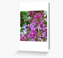 Lilac... Greeting Card
