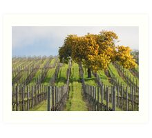Napa Vineyard W/Tree Art Print