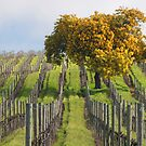 Napa Vineyard W/Tree by Robert George