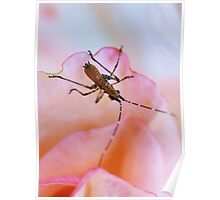 The Rose Bug Poster