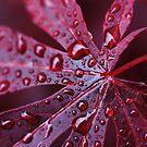 Red Rain by Paul O'Neill