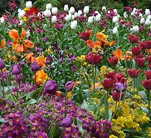 Tulips in Hyde Park by Mady Lewis