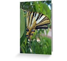 Swallowtail With Partially Closed Wings Side View Greeting Card
