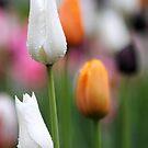 Morning Bloom II by mc27