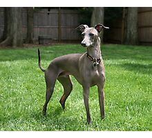 Special Greyhound Dogs Photographic Print