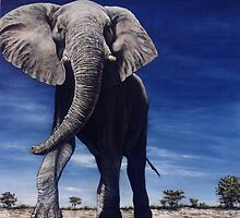 Elephant by Joe Helms
