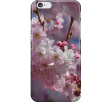 Blooming cherry tree in Spring iPhone Case/Skin