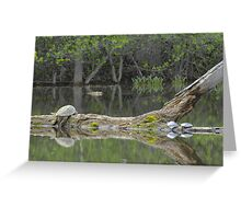 Snapping turtle lazing in the sun Greeting Card