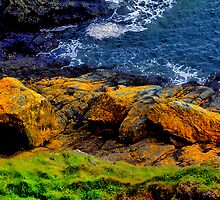 Intertidal Zone by Grahame Newell