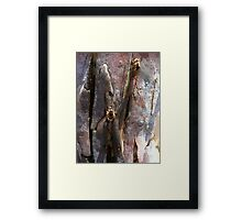 cicadas chrysalis hatched on gumtree bark Framed Print