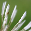Eensy weensy spider by Tamara Brandy
