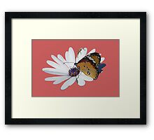 White Daisy and Butterfly Vector Background Removed Framed Print