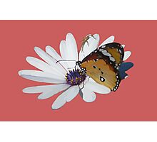 White Daisy and Butterfly Vector Background Removed Photographic Print