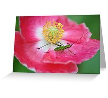 Little hopper Greeting Card