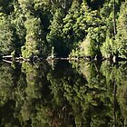 Reflections Gordon River TASMANIA by Tom McDonnell