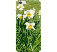 Host of Daffodils iPhone Case/Skin