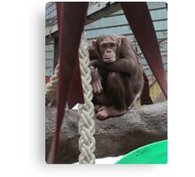 Chimp x Canvas Print