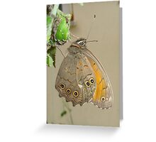 Meadow Brown Butterfly Feeding On Aphids Greeting Card