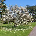 Magnolia Blossom by AnnDixon