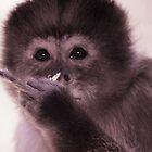 Cranky monkey by helenrose