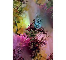 Spring Fling II Photographic Print