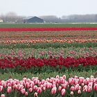 Spring in Holland by Janone