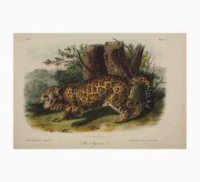 James Audubon - Quadrupeds of North America V3 1851-1854  Jaguar Baby Tee