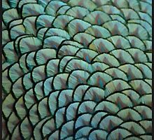 Beautiful Elegant Peacock Feathers by SaraValor