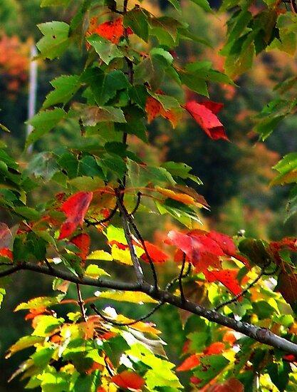 Fall Medley by Jann Ashworth