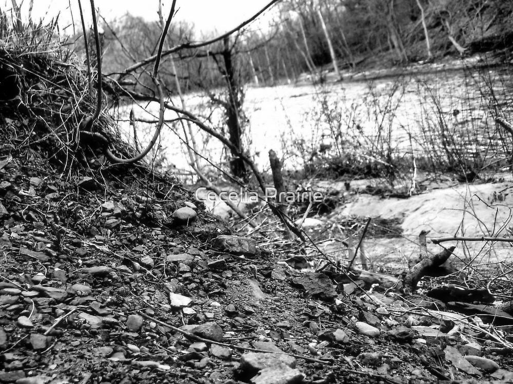 The ground up by Cecelia Prairie