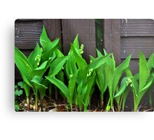 Lily of the Valley......... Metal Print