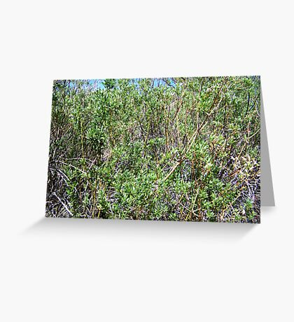 Willow Wall Greeting Card