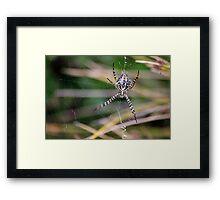 Garden Orb Spider Framed Print