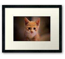 Boot the kitten portrait Framed Print