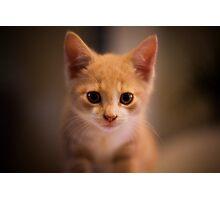 Boot the kitten portrait Photographic Print