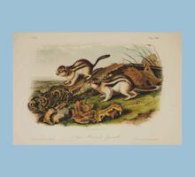 James Audubon - Quadrupeds of North America V3 1851-1854  Jay's Marmot Squirrel One Piece - Short Sleeve
