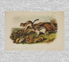 James Audubon - Quadrupeds of North America V3 1851-1854  Jay's Marmot Squirrel One Piece - Long Sleeve