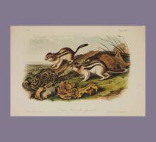 James Audubon - Quadrupeds of North America V3 1851-1854  Jay's Marmot Squirrel Kids Tee