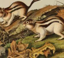 James Audubon - Quadrupeds of North America V3 1851-1854  Jay's Marmot Squirrel Sticker