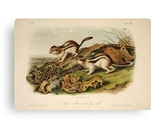 James Audubon - Quadrupeds of North America V3 1851-1854  Jay's Marmot Squirrel Canvas Print
