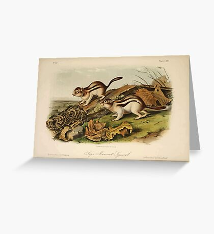James Audubon - Quadrupeds of North America V3 1851-1854  Jay's Marmot Squirrel Greeting Card